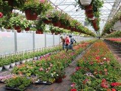 Cultivarea florilor și arbuștilor decorativi Кишинёв мун.