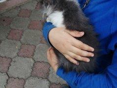 Отдам кота в добрые руки Dondușeni