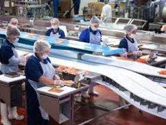Muncitori necalificați în industria alimentară Кишинёв мун.